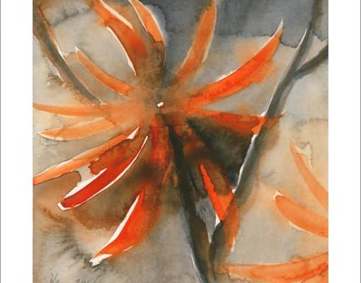 Kunstkort kvadratisk Erythrina abyssinica